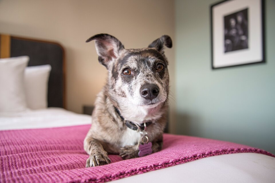 The Preston, one of the world's top dog-friendly hotels
